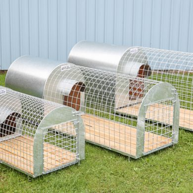 Dog kennels and runs